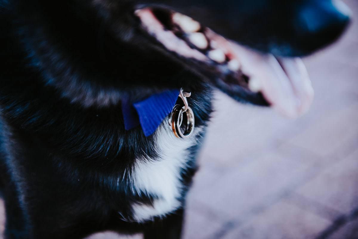 pet wedding ring collar